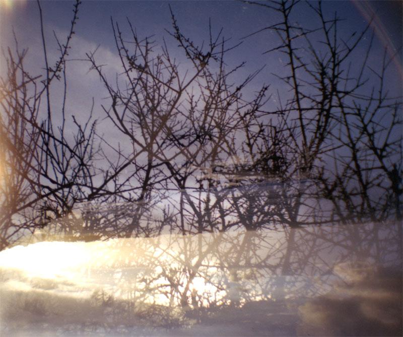 branchage-photo-lomo-graphiste-rennes